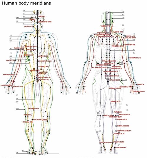 良導絡の経絡人体図